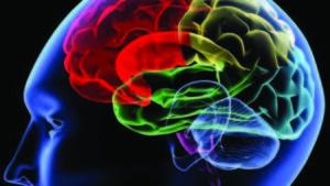 concussion-694940094001_1409784734001_640-brain1